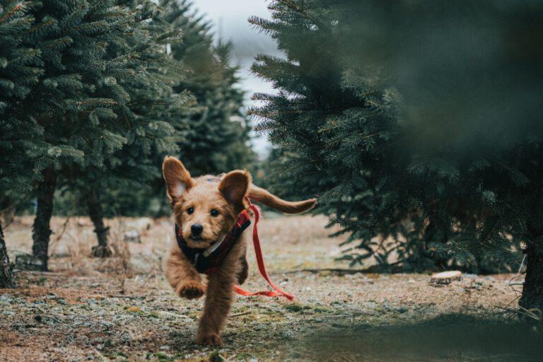 Hond rennend door het bos   Camper huren met hond   Camper Deluxe